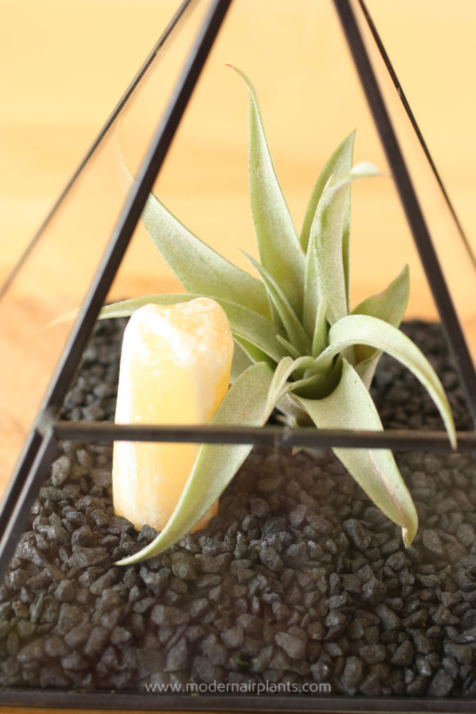 Pair air plants with black gravel for a sleek look