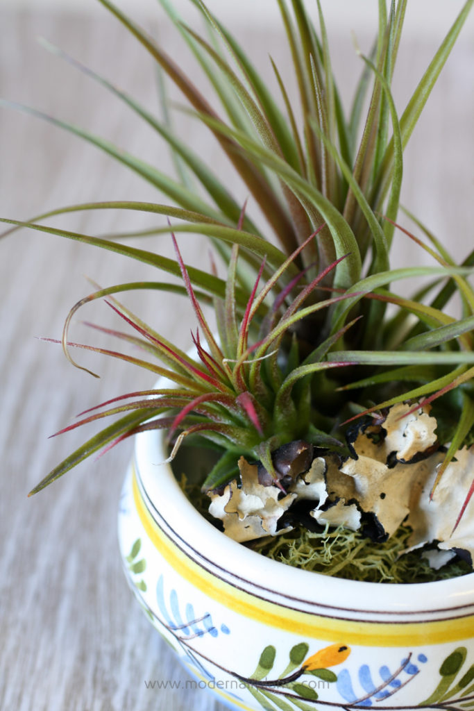 Pottery Air Plant Container