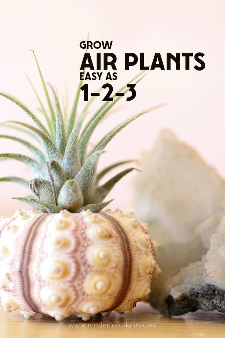 Valuable tips on growing air plants