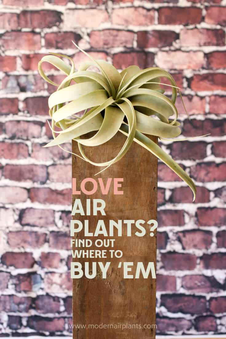 Wow a great site with great info on buying air plants