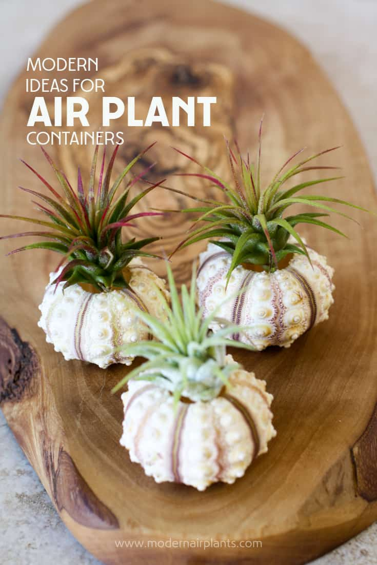 You'll love these air plant container ideas