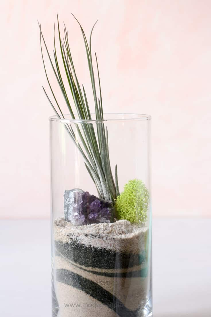 Sand is a great substrate for air plants