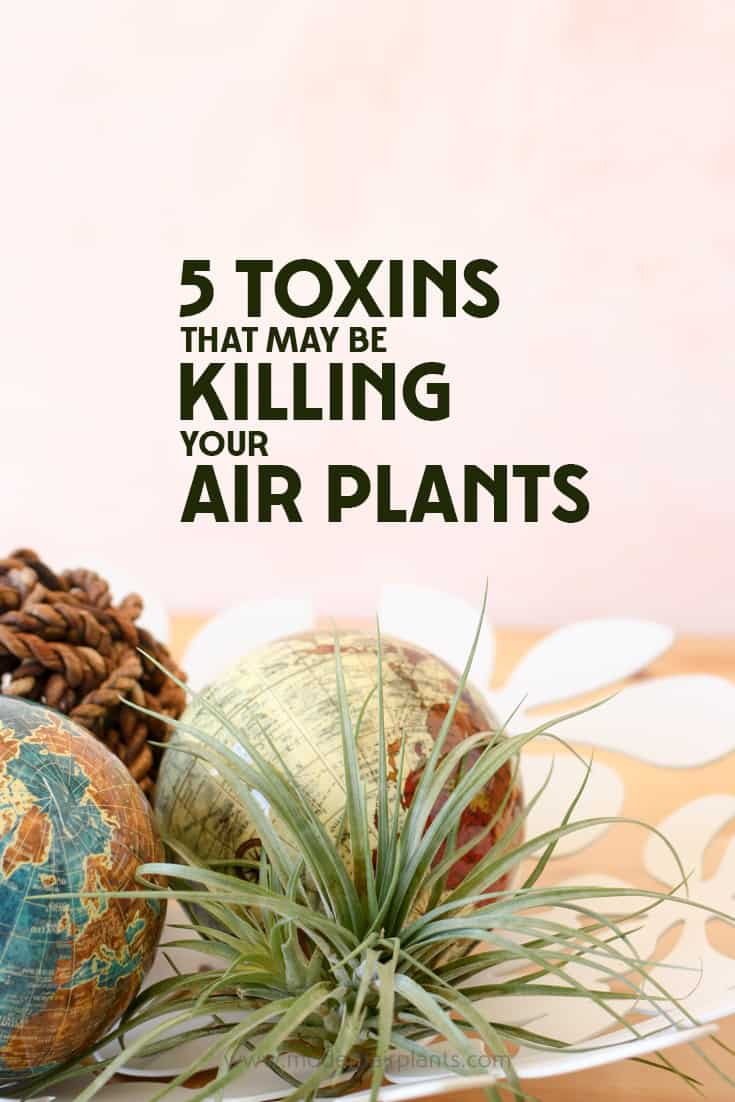 Wow - This post will show you what metals are toxic to air plants