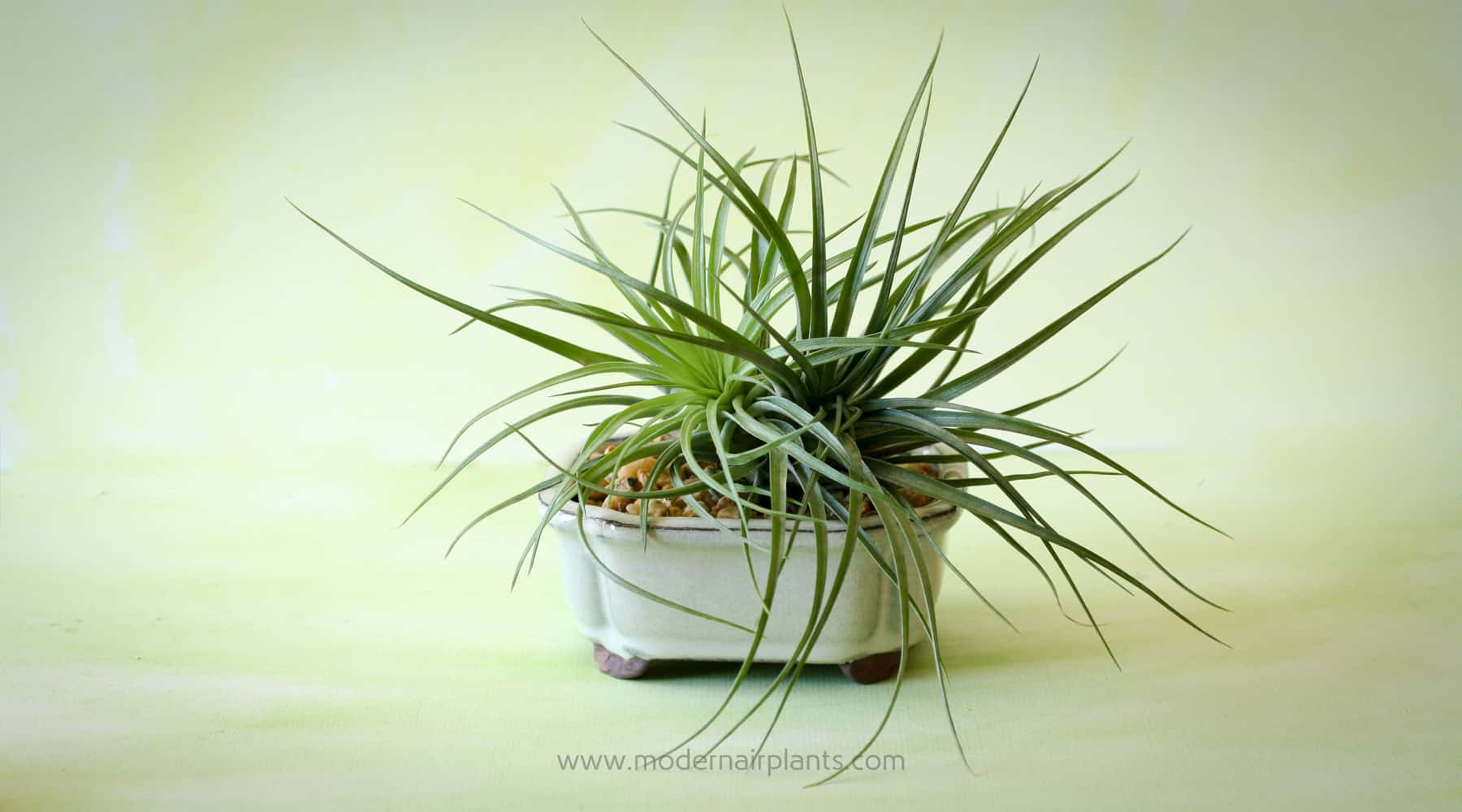 Everything you ever wanted to know about air plant pots for Air plant planters