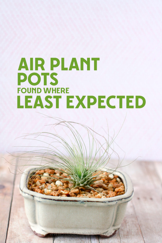 Everything You Ever Wanted To Know About Air Plant Pots