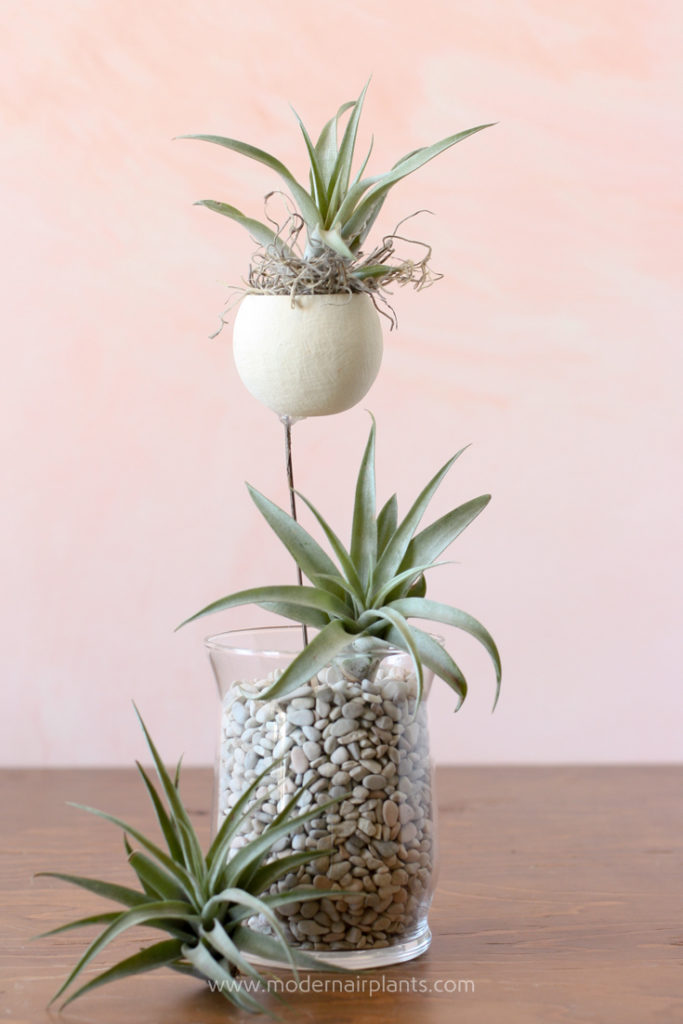Air Plants and a Bell Cup