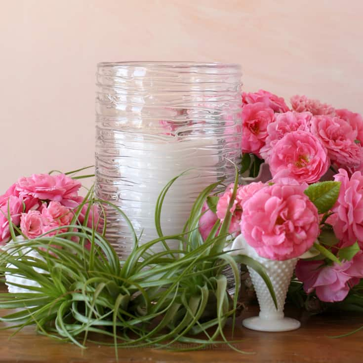 Air plant and roses - a perfect combination