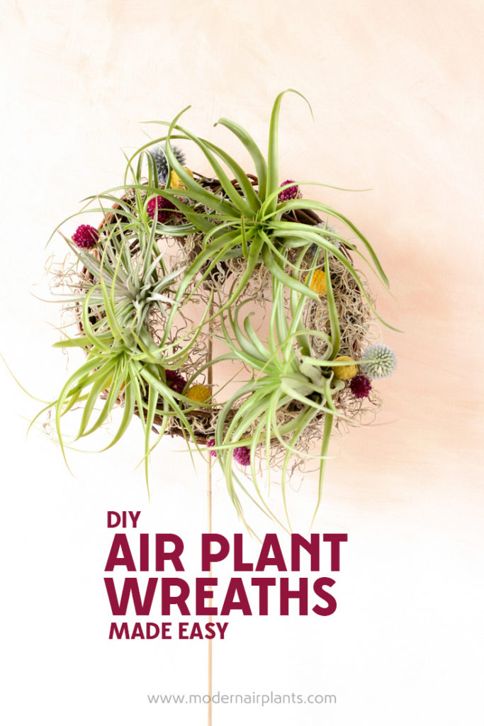 Create your own air plant wreath with thi