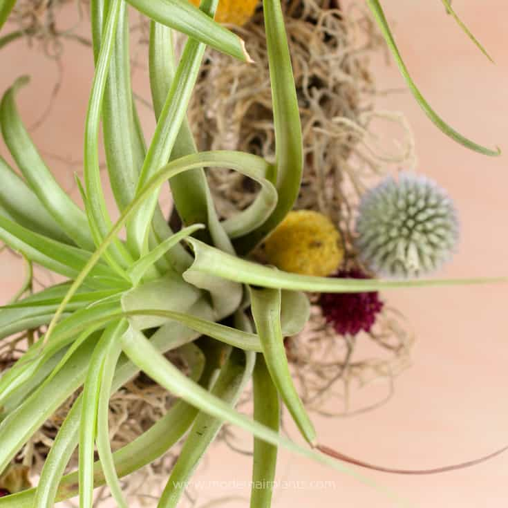 Embellish your air plant wreath