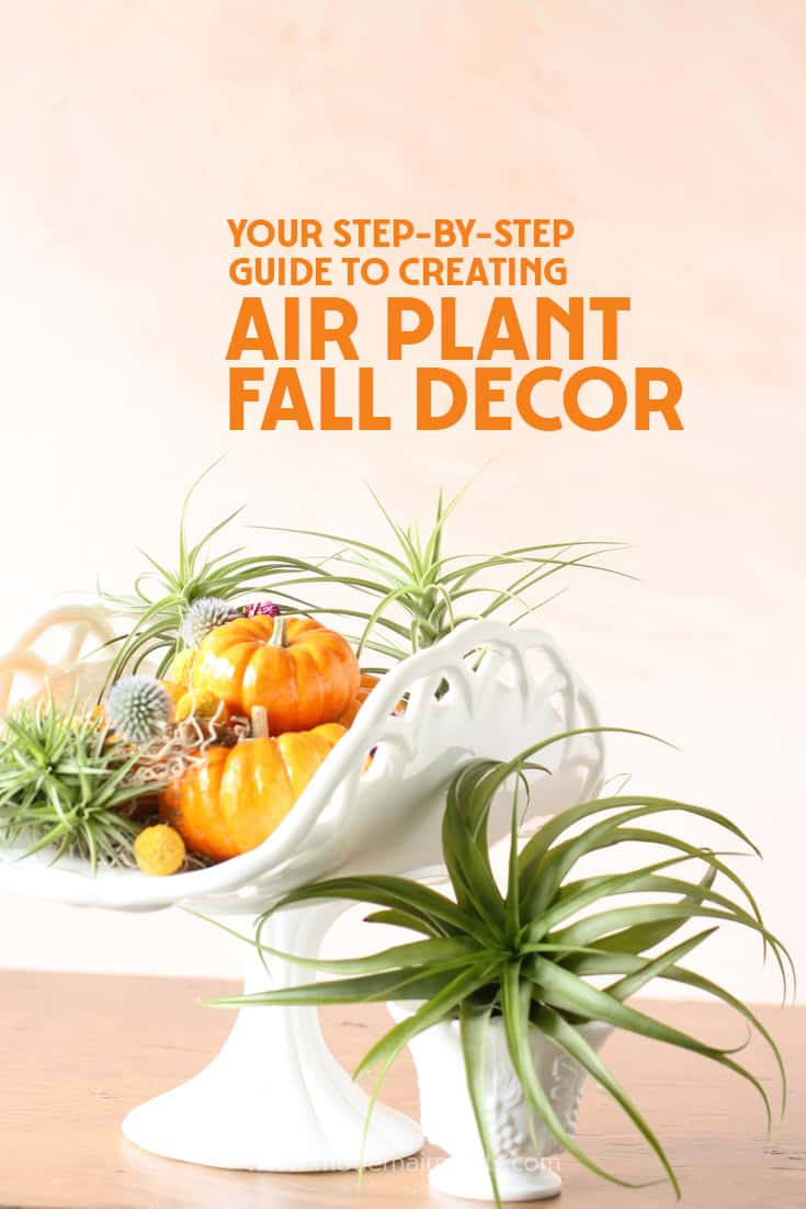 Fall in love with air plants and pumpkins