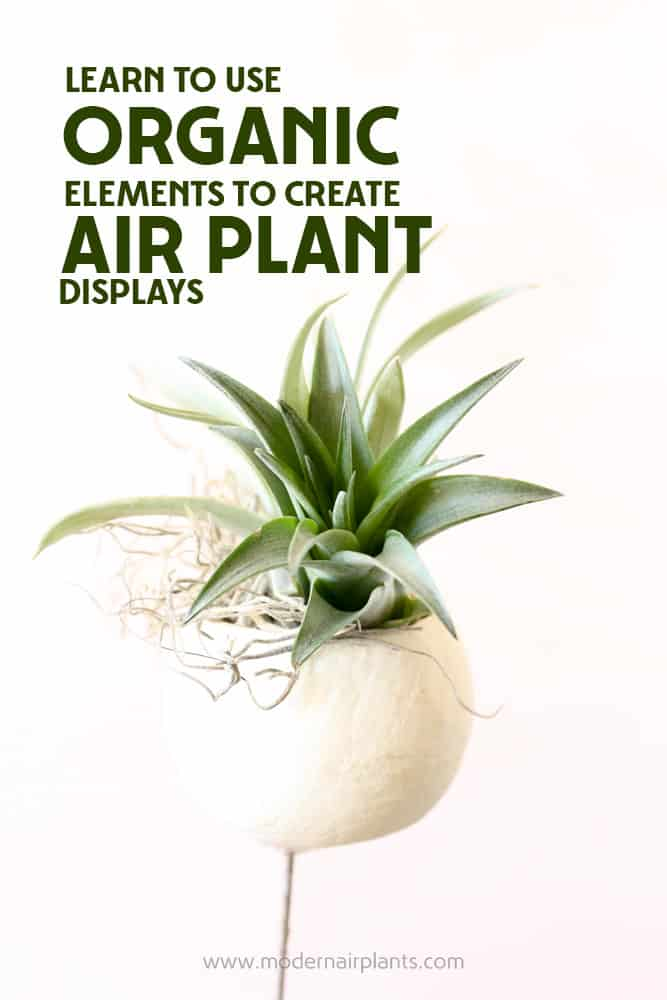 Grab some granola and learn to create organic air plant displays