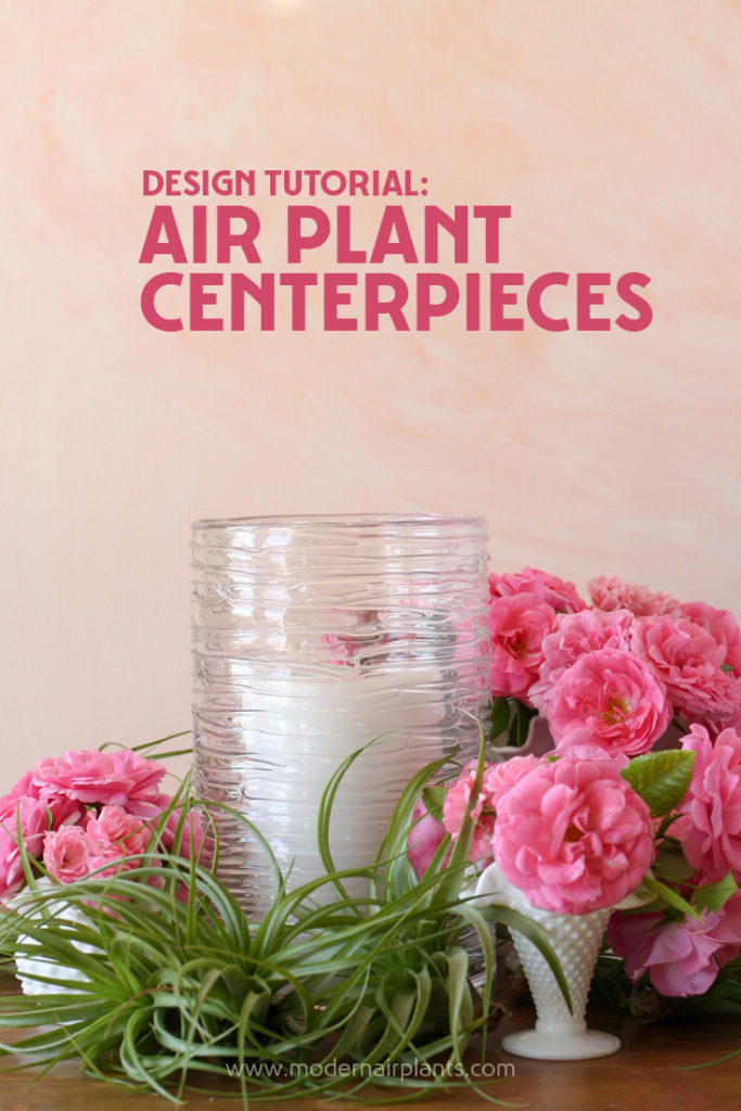 Modern tips on creating air plant centerpieces