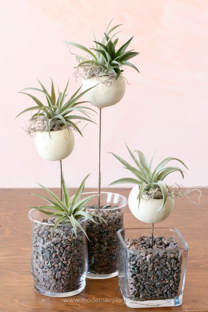 Trio of Bell Cups and Air Plants