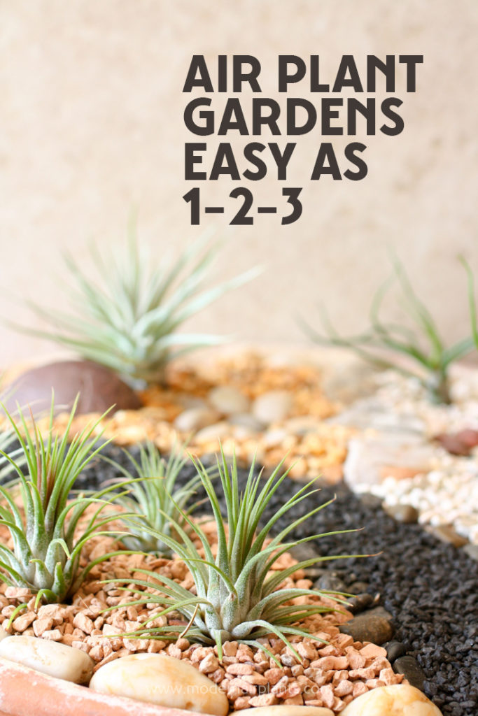 You'll LOVE these air plant gardens