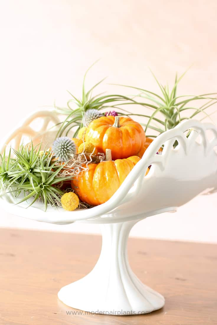 dress up your air plant arrangement with dried flowers