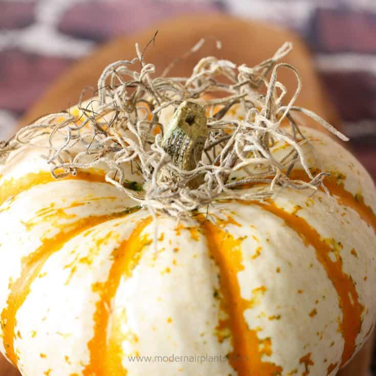 pumpkins and autumn decor