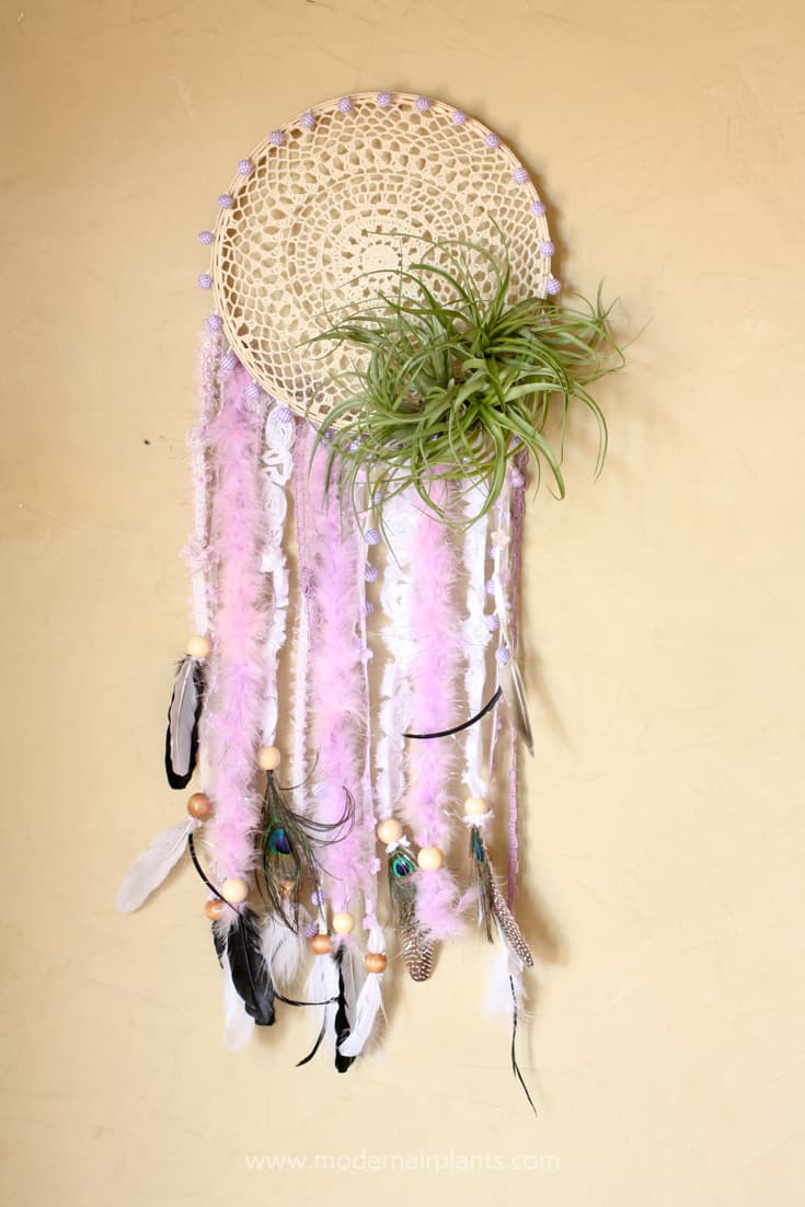 Air plants and dreamcatcher with doily