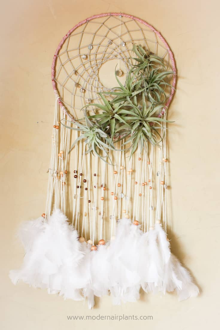 Air plants with traditional dreamcatcher