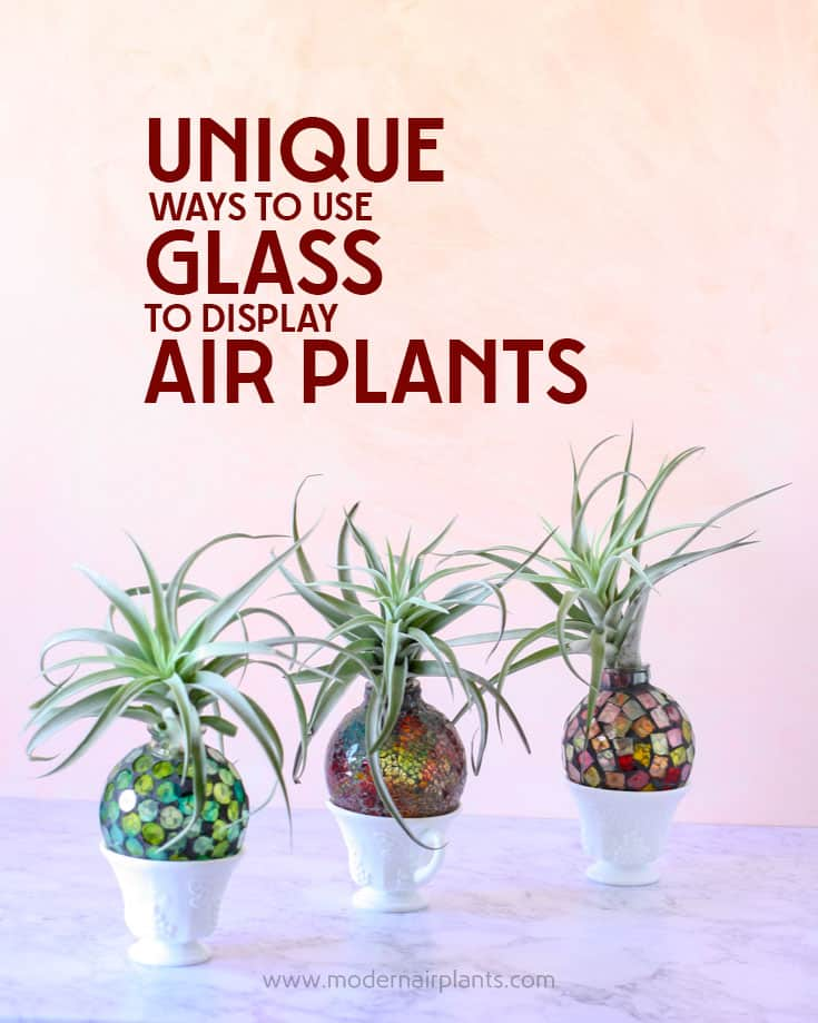 Fun and creative ways to use GLASS to display AIR PLANTS
