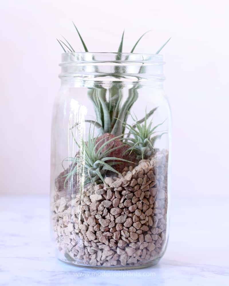 Rocky mountain terrarium