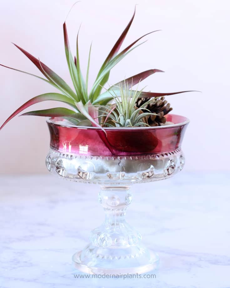 candy dish with air plants
