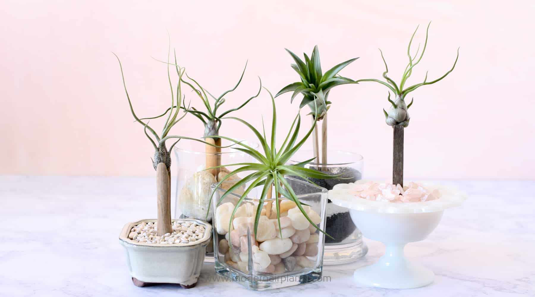 clothespins give air plants a lift