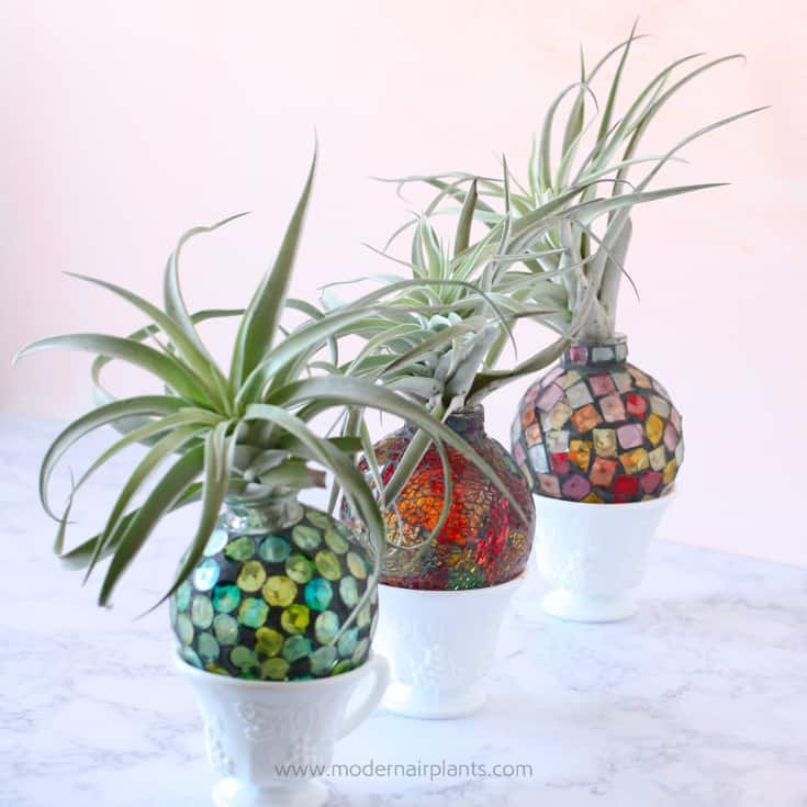 hummingbird feeders turned air plant vases