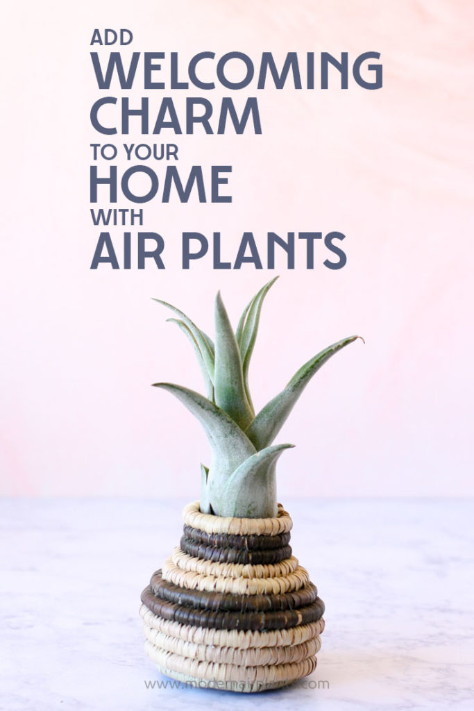 Air plants and baskets unite to create the comforting feeling of HOME