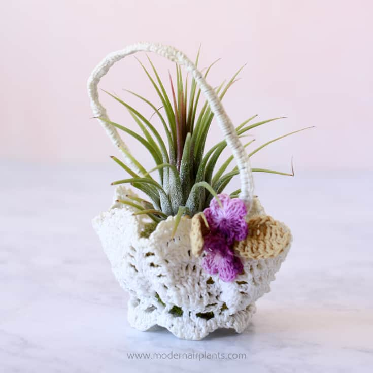 Crocheted basket air plant holder