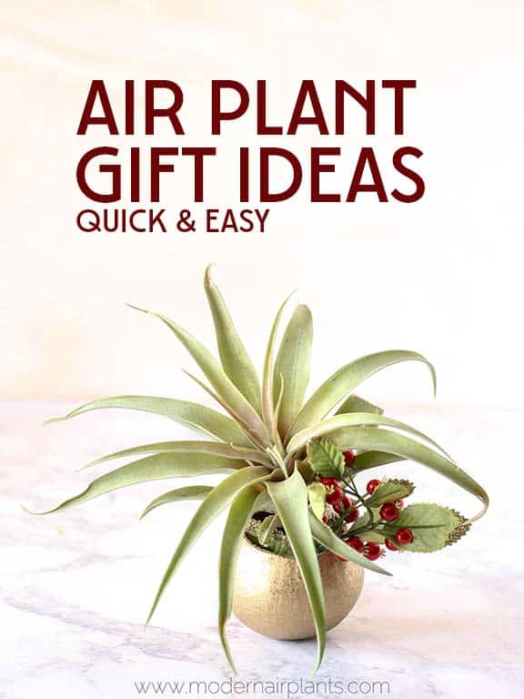 Ideas for air plants air plants home decor ideas with for Air plant holder ideas