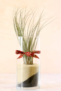 Festive air plant gifts