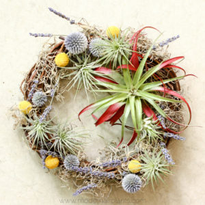 Gorgeous air plant wreath