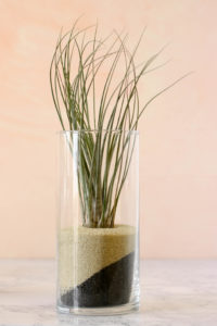 Juncea air plant gift