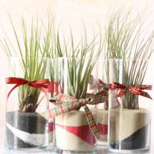 diy air plant gift ideas