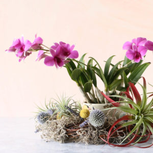 orchid - air plant wreath