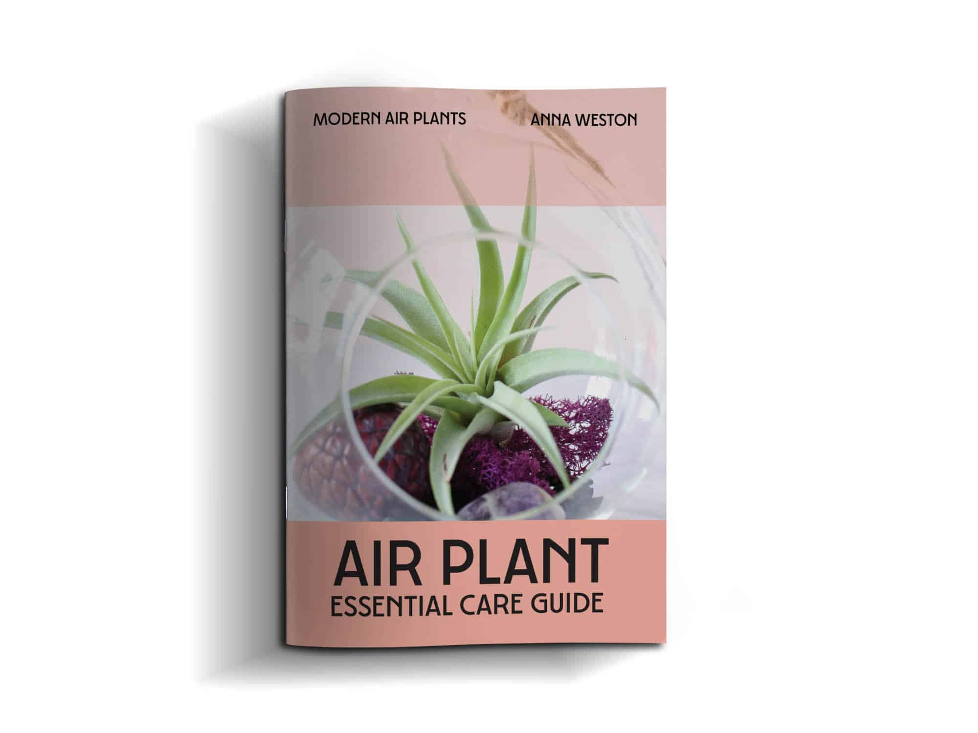 air plant essential care cover