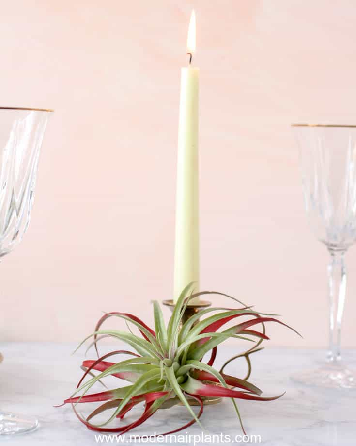 red abdita - table setting