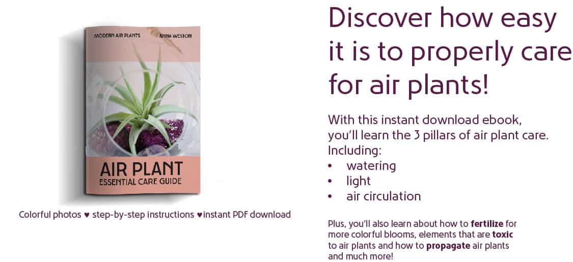 Air Plant Essential Care Ebook Ad