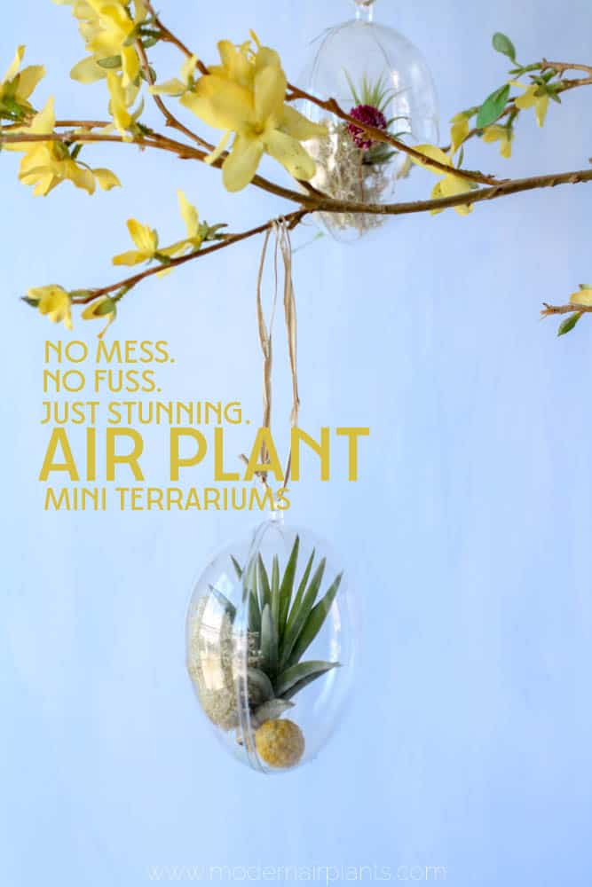 You'll love this easy guide to creating your own mini air plant terrariums - perfect for Easter