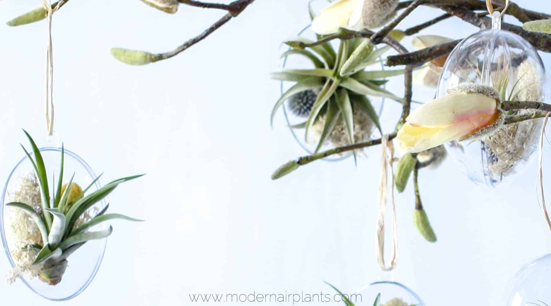 air plants - Easter decor