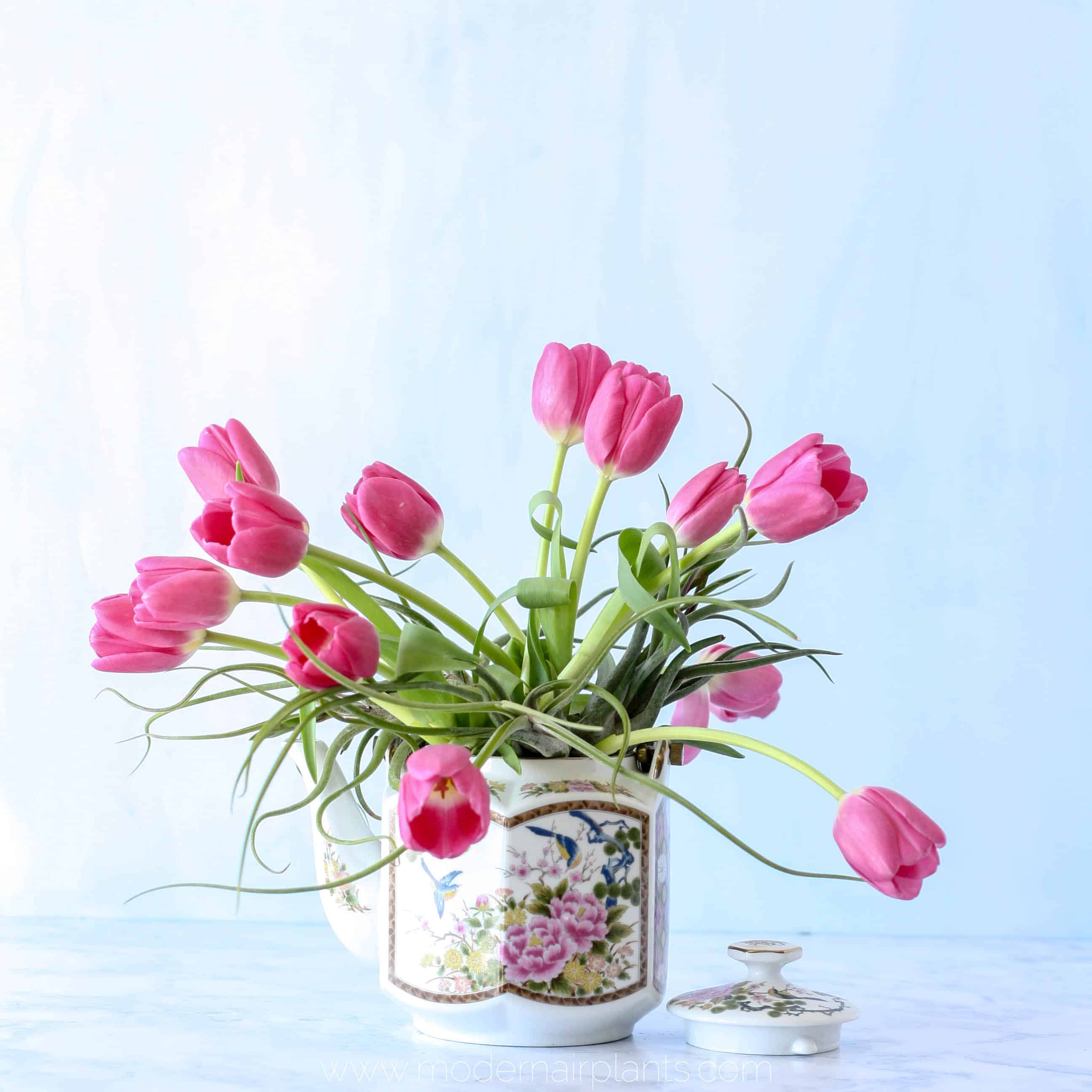 air plants and tulips