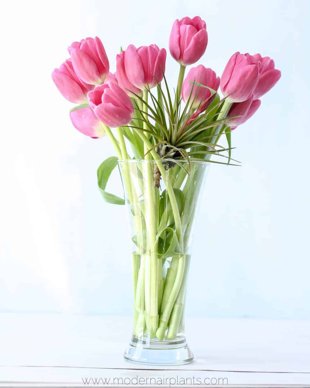 tulips and air plant