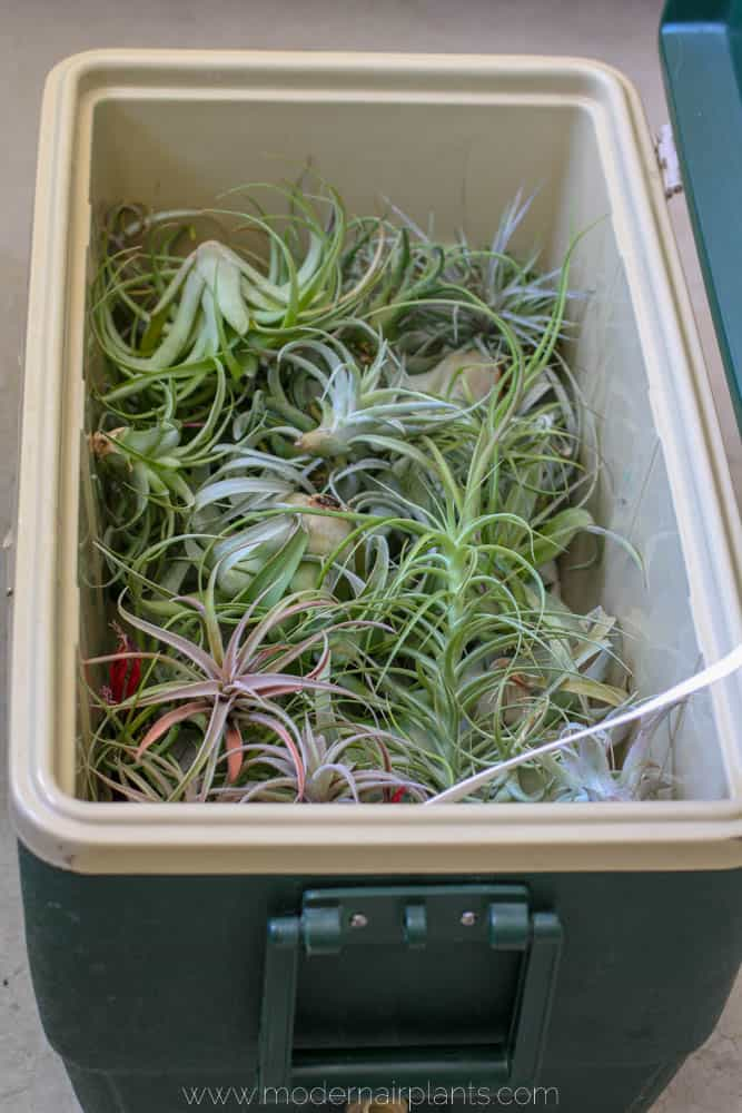 cooler - air plants - transport