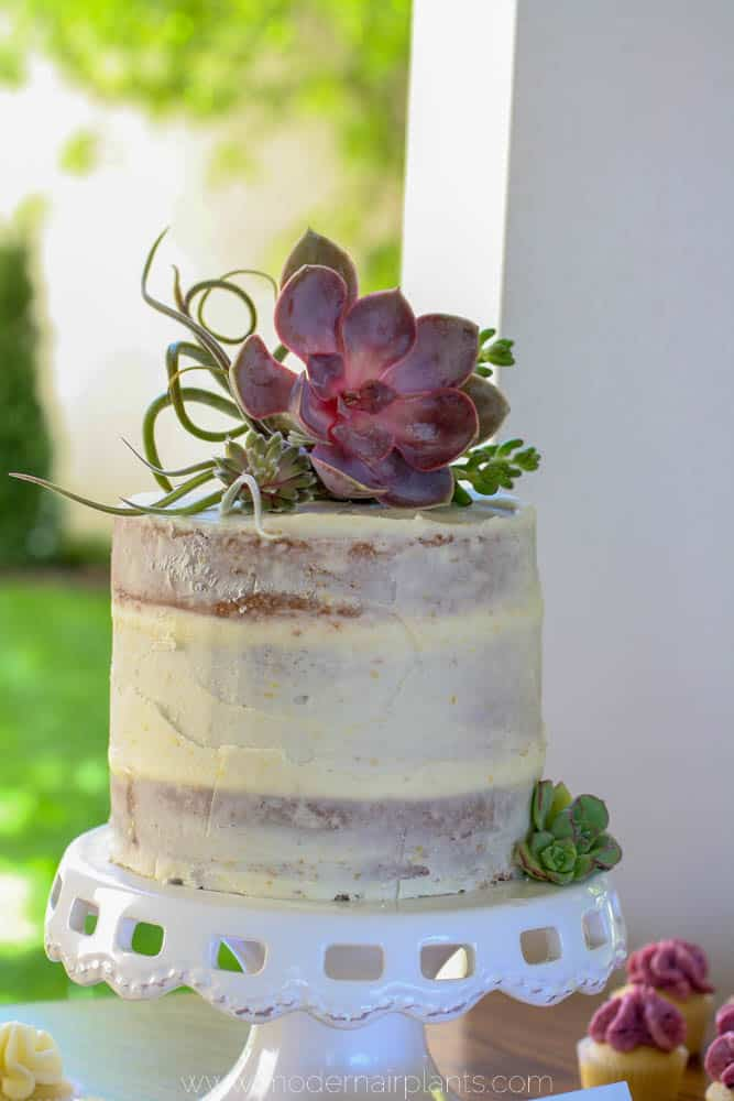 wedding cake - air plants